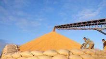 改革粮食价格形成和收储机制应市场和调控同时发力