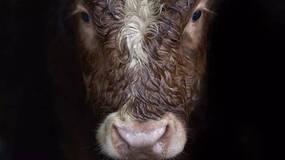 美国牛肉去哪儿了?