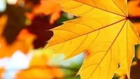 林语堂:秋天的况味