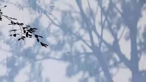 岁时 • 立冬 | 昨夜西风凋碧树