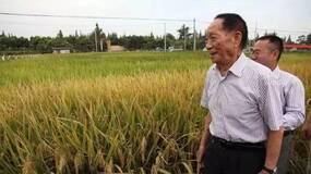 """相比于超级稻的亩产纪录,""""去镉稻""""要有价值得多"""