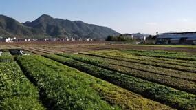"""平台借款人调查:是什么撑起了""""农场主""""500亩的果蔬基地?"""