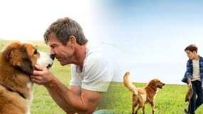 把一条狗当自家人很容易, 但把一条狗当作狗很难
