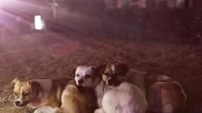 流浪狗的三个可爱孩子寒风中互相依偎·····