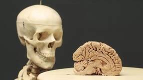 相比大脑,我们一直在忽视身体