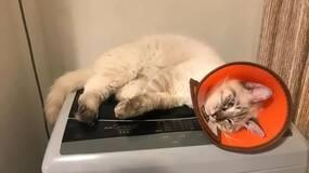 养猫这件人生大事,请先在脑海里脑补一万遍再决定