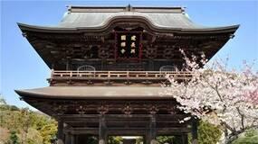 何欢欢︱舌尖上的日本禅