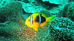 有些鱼的鱼生理想就是——变性|大象公会