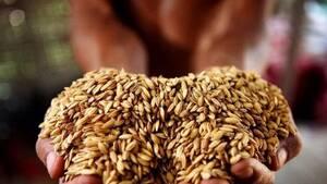 多國禁止出口,糧食危機來了?