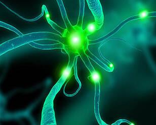 突破:皮肤细胞转化为脑神经治亨氏舞蹈症