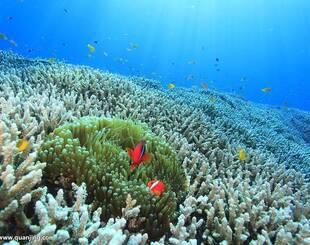 《自然》杂志:大堡礁珊瑚集群因海洋热浪正缓慢死亡