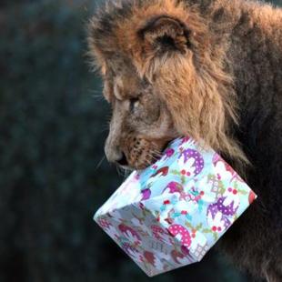 伦敦动物园在狮子园设立度假屋