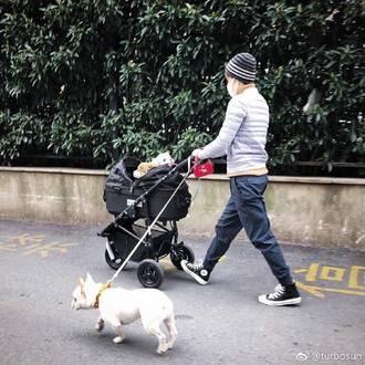 孙俪:答应我,让我们做一名文明的养犬人!