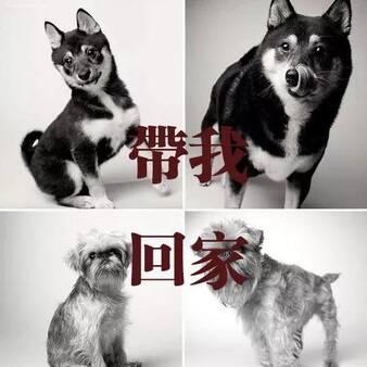 南昌100只流浪狗将被安乐死?你同意吗?