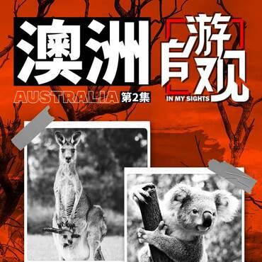 澳洲森林大火vs各类奇葩动物 | 《自游观》澳大利亚02