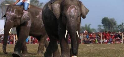 超会玩!大象足球赛开战