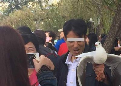游客抓红嘴鸥拍照