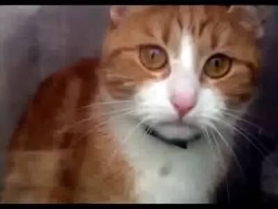 悲伤的猫咪 主人别走!