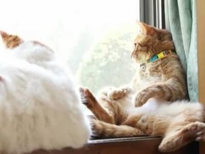 坐在窗台看风景的傲娇猫咪