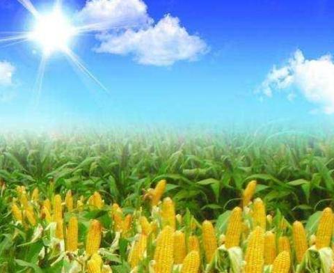 """国家决定设立""""中国农民丰收节"""", 农民的收入会增加吗"""