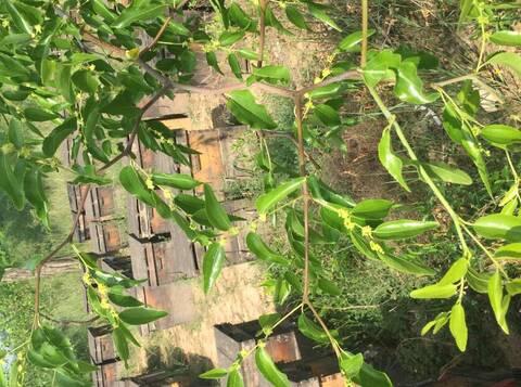 枣花蜂蜜性凉么?枣花蜜是热性的吗?