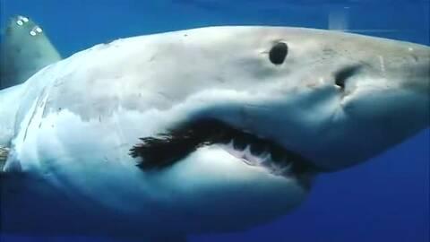 海豹爬上游艇求蹭船 瞧这小眼神好可爱