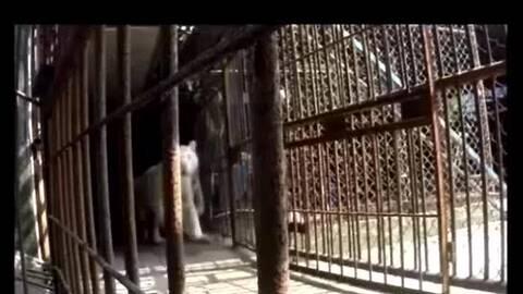 惊险!轿车野生动物园内开车窗