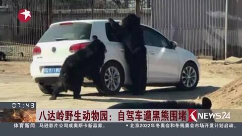 好悬!八达岭野生动物园黑熊将头探进车窗