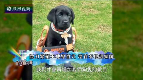 香港新视点 香港导盲犬现状