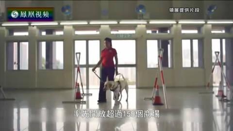 香港新视点 导盲犬从小受训 饮食起居需有规矩