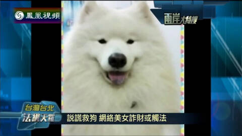 两岸大特搜 网络美女谎称救狗筹钱 诈骗或触犯法律
