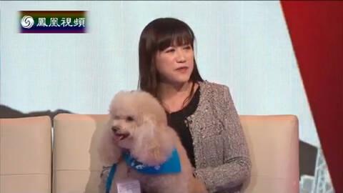 港人自讲 陆茵玲:小狗一岁后才可做狗医生