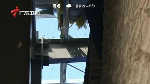 东海岛农民受灾严重 复产有序开展