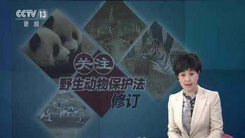 关注野生动物保护法修订