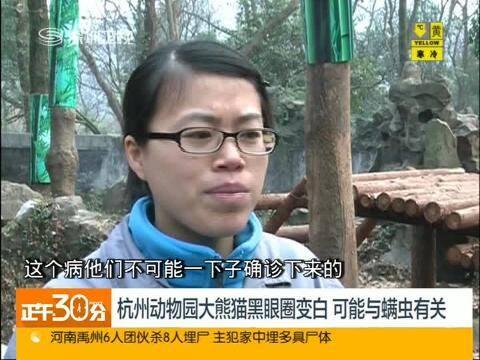 杭州动物园大熊猫黑眼圈变白可能与螨虫有关