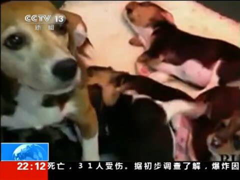 狗做活体实验视频曝光