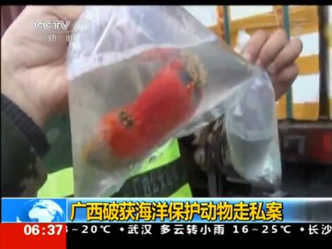 广西查获特大海洋保护动物走私案