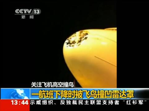 一架航班飞行中撞鸟 机头雷达罩被撞凹-手机凤凰网