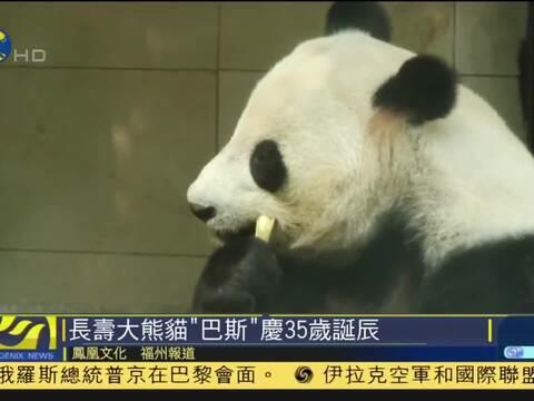 """亚运吉祥物盼盼原型""""巴斯""""成为中国最长寿活体大熊猫"""