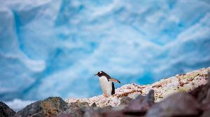探寻南极之境 送给世界尽头的一封情书