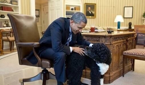美国总统的宠物们