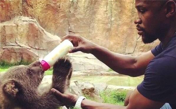 画风突变!梅威瑟动物园喂小熊