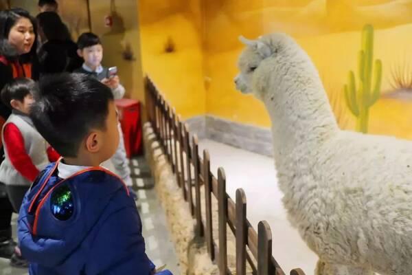 zoonly作为天津首家室内主题动物园,占地约3000平方米,有大约88种动物