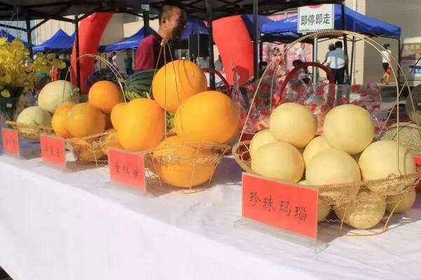 农业经济结构调整的重要载体,今年反季节蜜瓜的种植面积达到1万亩
