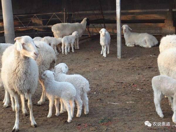 12月4日内蒙古地区农产品行情价格