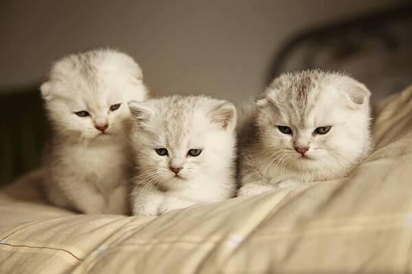 """主人:我的可爱小猫咪,是如何变成""""死肥宅""""的?"""