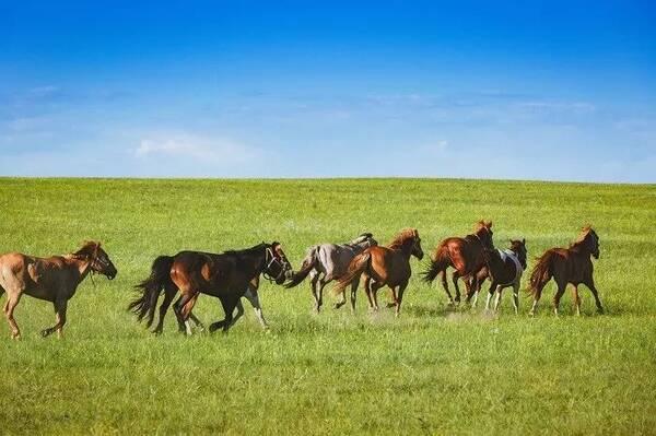 壁纸 草原 动物 马 骑马 桌面 600_399