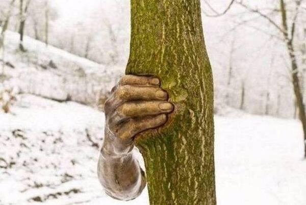 一只手握着树50年,赵丽颖也看过?网友:世界上最孤独执着的手