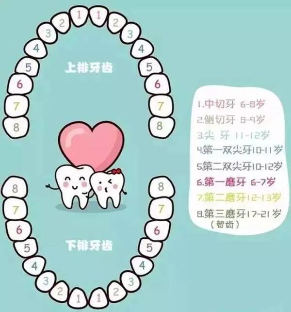 儿童换牙顺序图如下图片