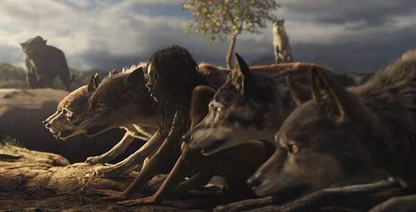 森林之子毛克利原著改编的冒险故事 迟到太久的丛林之